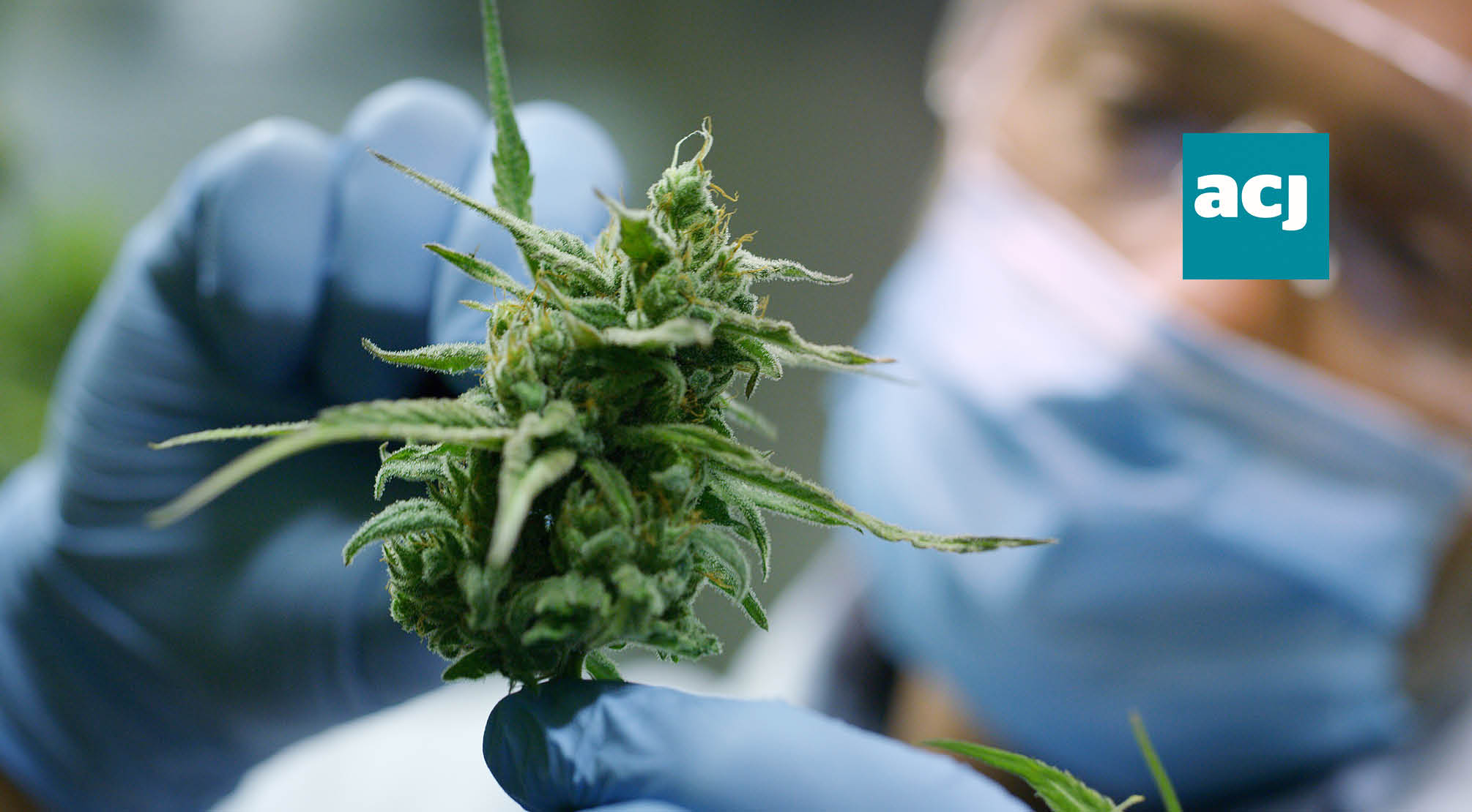 NICE approve two cannabis-based medicines for NHS