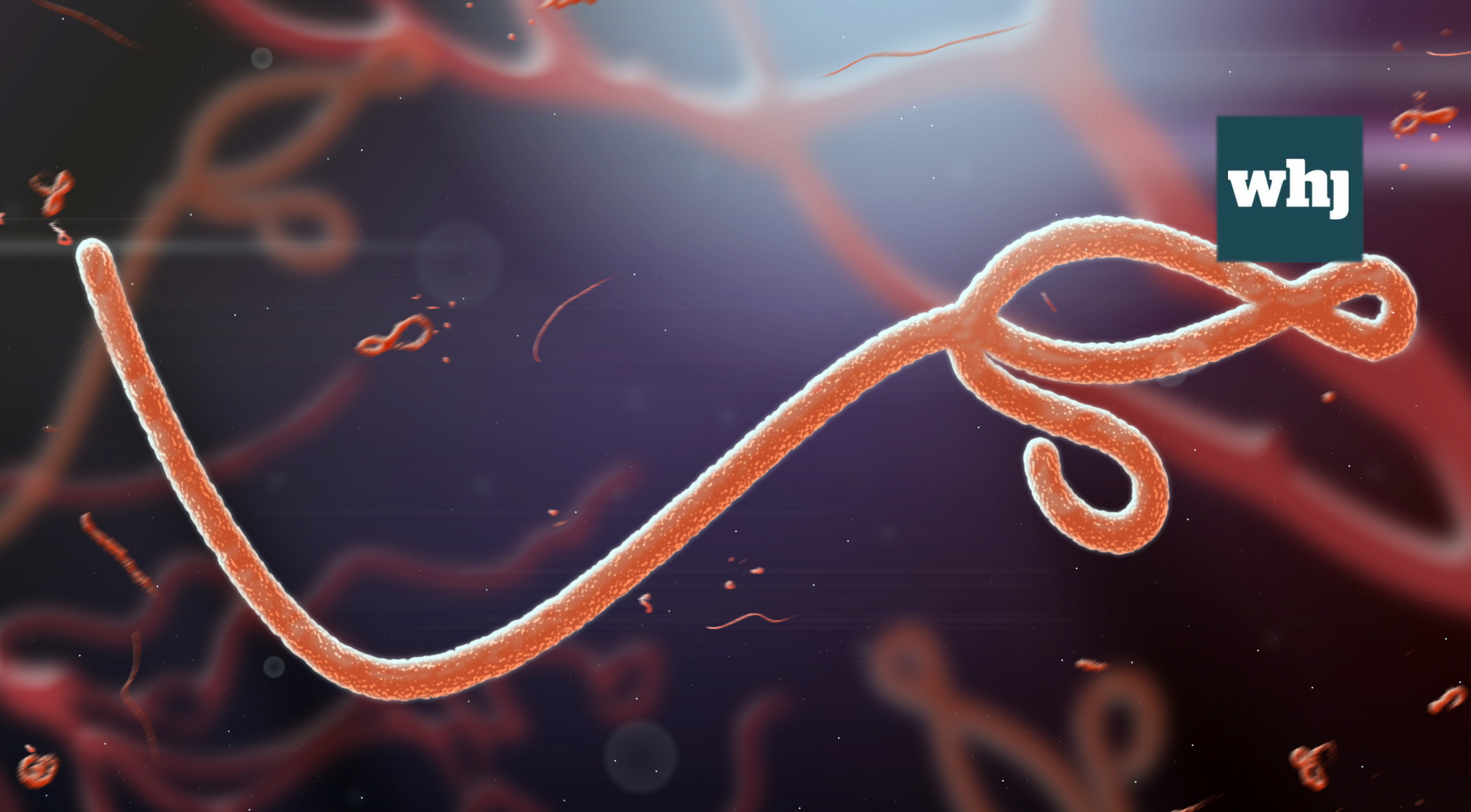 Democratic Republic of the Congo confirms new Ebola case