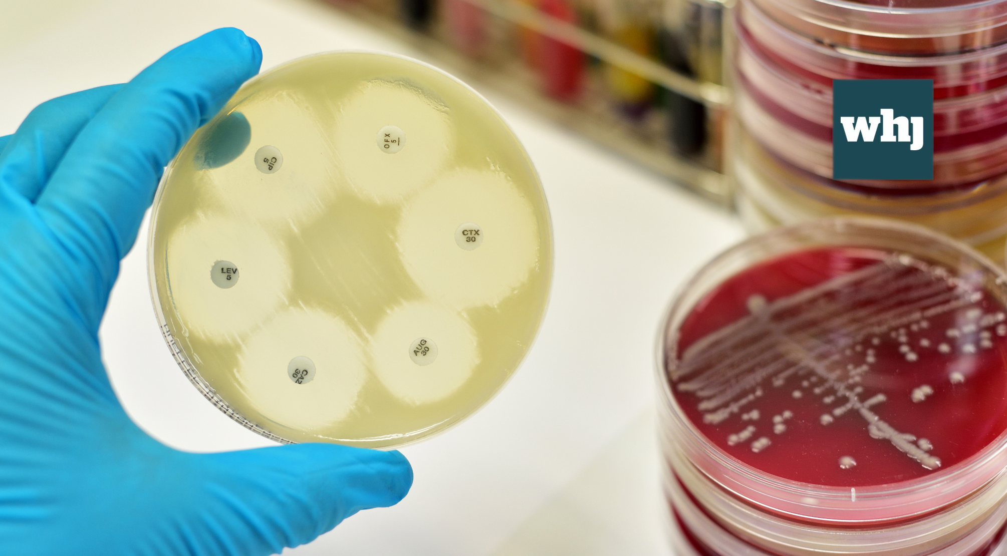 A silent tsunami is coming – it's time to stem the tide of AMR
